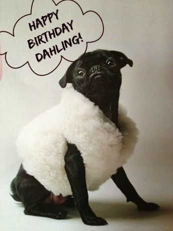 A Pug in sheep's clothing