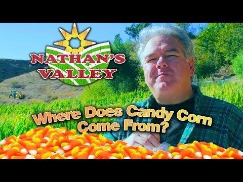 ▶ Where Does CANDY CORN Come From? - Nathan's Valley (f. Jim O'Heir) - YouTube