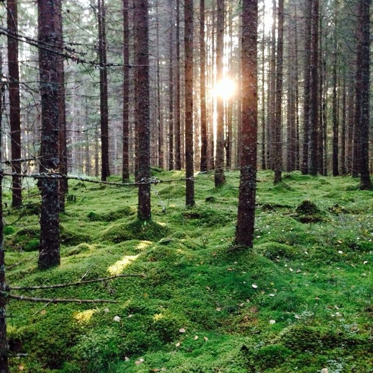 My forest in NorwayElverum