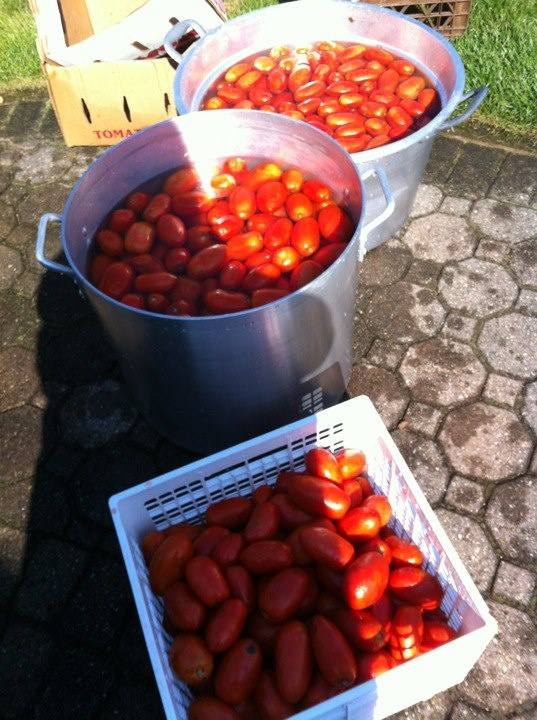 First you boil the tomatoes in large pots on giant burners outside.