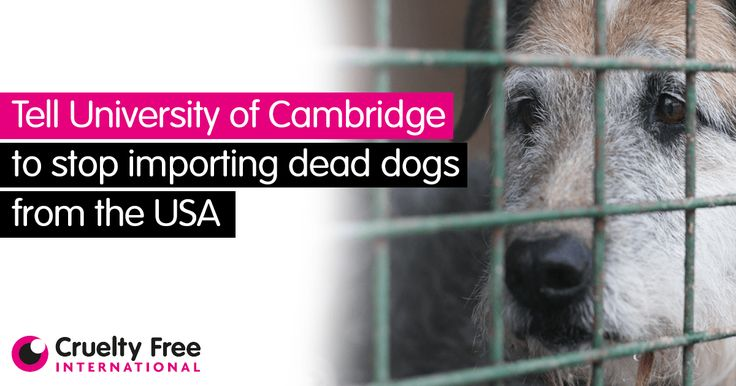 Please fill in your details below to send the following email to the University of Cambridge and the University of Nottingham, urging them to stop importing dead dogs from the USA.