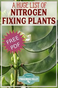 The best Nitrogen Fixing Plants to grow in your Permaculture Garden or Food Forest