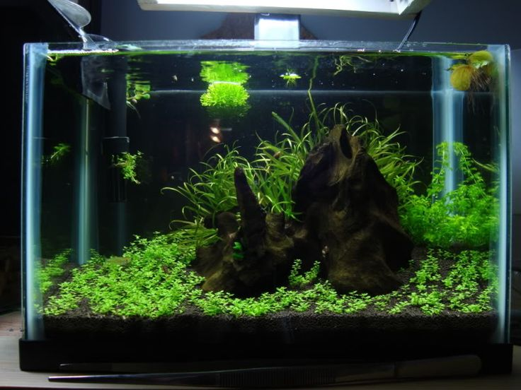 Low Tech Tank Show-and-Tell (low tech can be lush, too! =) - Page 47 - The Planted Tank Forum