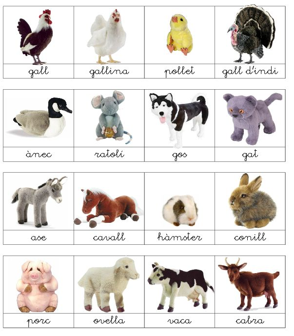 vocabulari d'animals - Buscar con Google