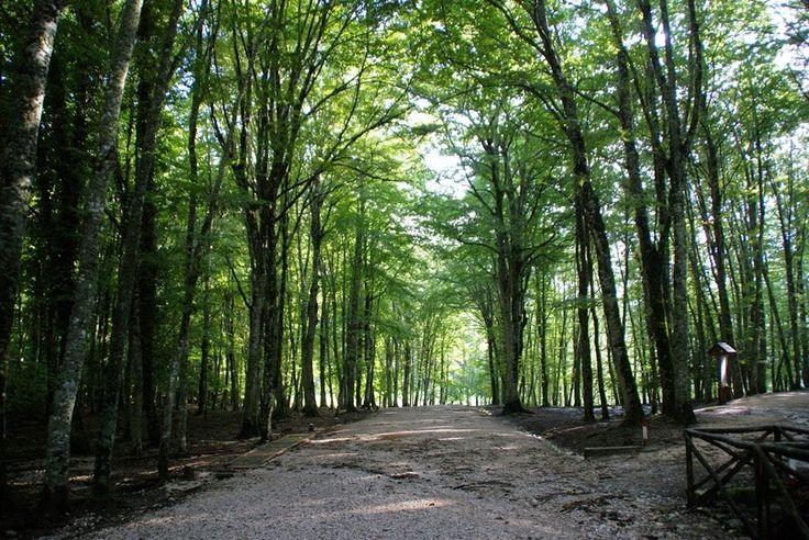 Umbra Forest in Gargano