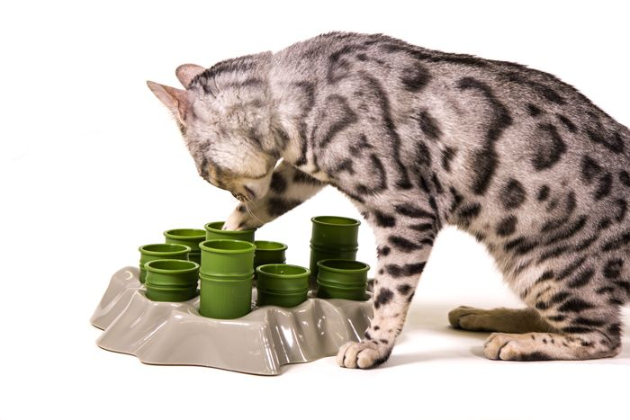 5 Ways Food Puzzles Can Improve Your Cat's Health