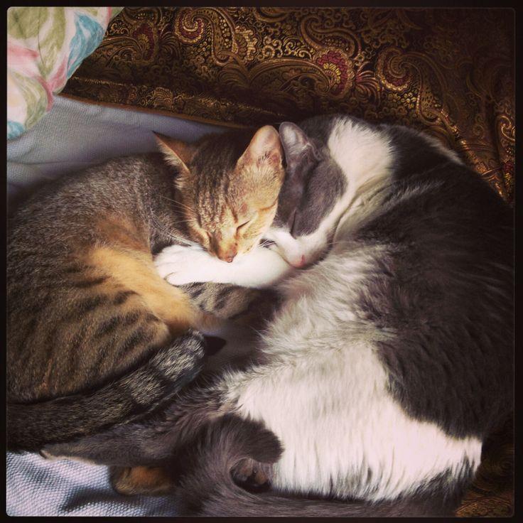 Lalo y Tobias