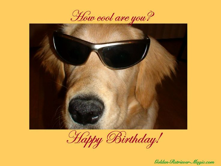 happy birthday  with dogs images | free dog ecards, free printable ecards, puppy cards, golden retriever ...