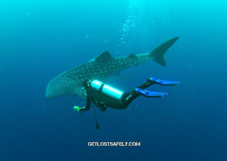 Nabire, Whale Shark's Playground