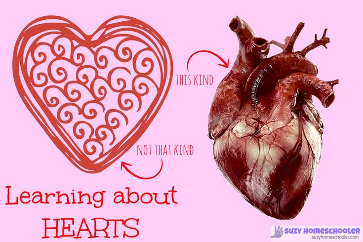 STEM Saturday: Learning About Hearts #homeschool #teaching #science #resources #STEM #humanbody