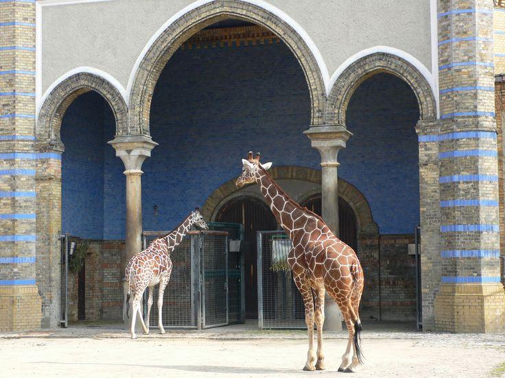Berlin Zoo by heatheronhertravels