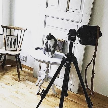 Here we have photographer @michaelaenered using her cat as a text subject for her budding studio. If you are using a larger canon camera then use our flatmount-extension.  #remmenstraps #leatherstrap #camerastrap #canon #nikon #photostudio #cat #dslr #MadeinSweden