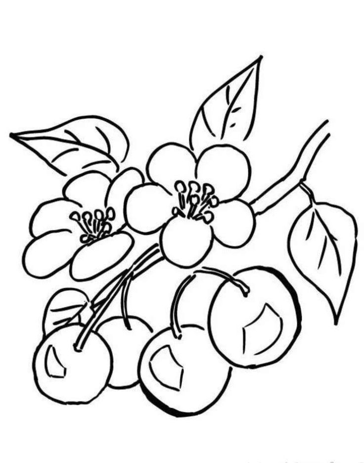 32+ Cherry blossom tree colouring pages information