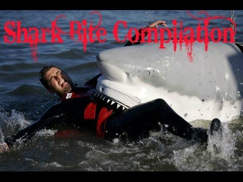 Shark Bite Compilation