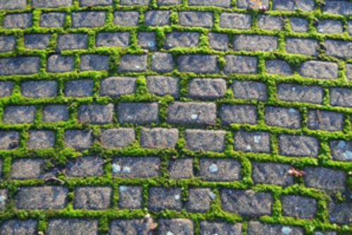 """Terrasse Holz Moos Entfernen ~ Über 1 000 Ideen zu """"Außen Gehweg auf Pinterest  Gehwege"""