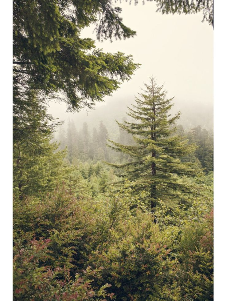 Into the Mist by Catherine McDonald for Artfully Walls