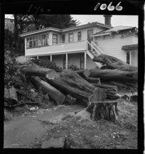Felled trees at Ohiro Lodge, Brooklyn, Wellington, 1 April 1963.