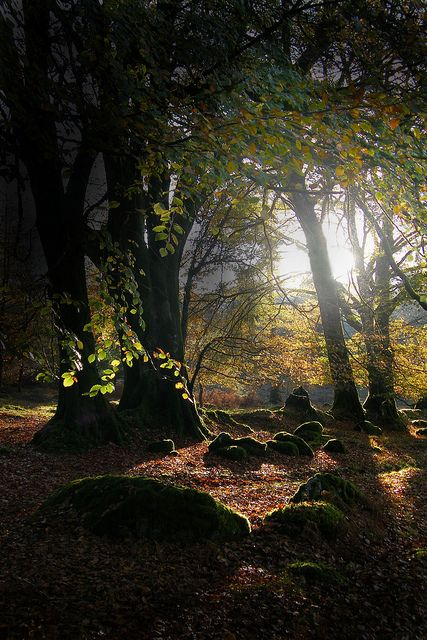 In the woodland which surrounds Burrator Resevoir, on Dartmoor, in Devon, England