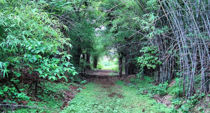 Take a walk into the Wild | Dumna Nature Reserve, Jabalpur | MP Travelogue