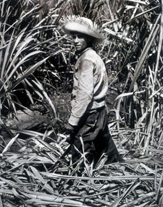 Las pavas y su historia artesanal en Puerto Rico | El punto es…