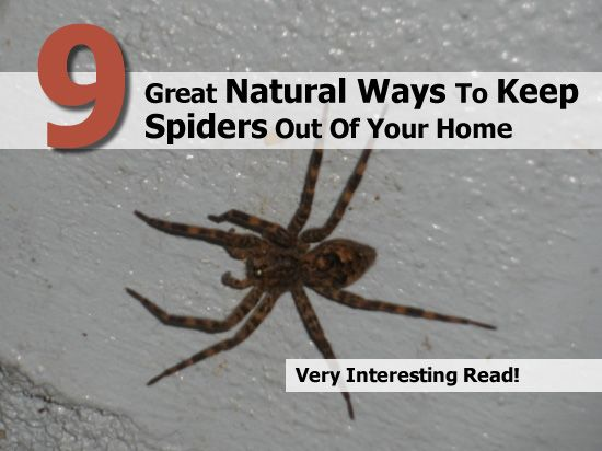 1000 images about bug pest be gone on pinterest vicks for How to keep spiders out of your house