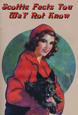 30s 40s woman-and-scottie dogs