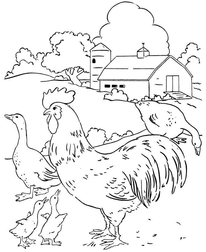 Farm scenes coloring page | Farm Scene - Chickens and geese in the barn yard
