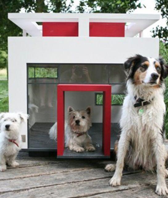 Extreme Dog Houses