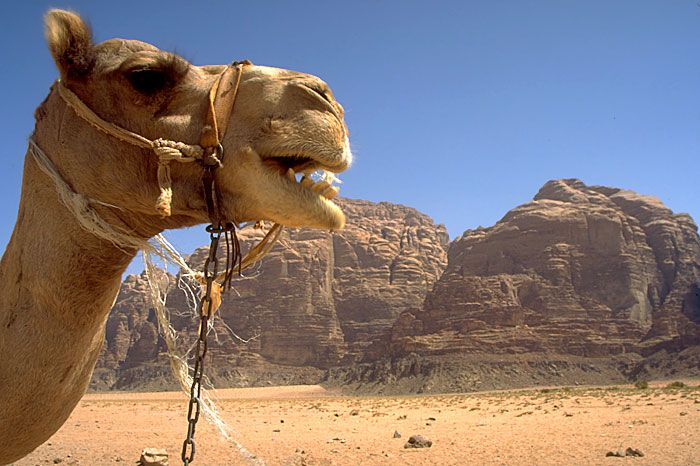 Wadi Rum and other Jordan sights with information.
