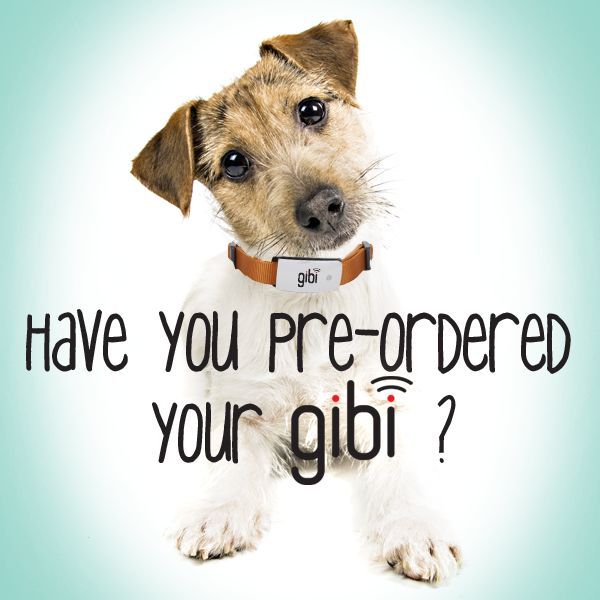 Pre-Order the #Gibi online today and never lose your dog again! Recieve real time updates 24/7 of your dogs exact location. #BestDecision #Safety #Gibiformydog