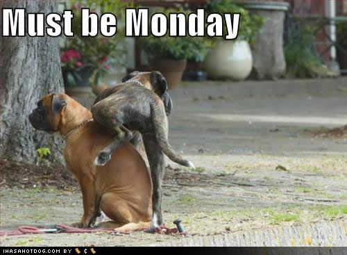 .....Funny Dogs, Mondays, Funny Pictures, Quote, Funny Stuff, Humor, Dogs Pictures, Funny Animal, Furries Friends