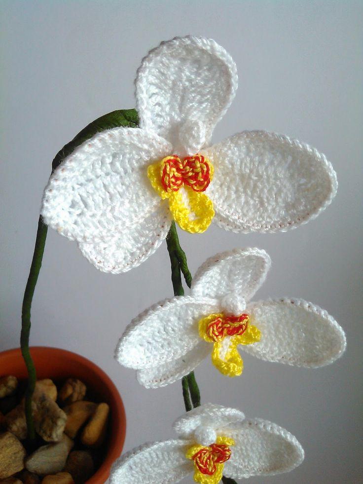 zsutta: Orchidea