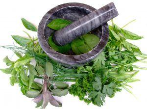 Herbs for weight loss Natural Antibiotics: Foods that Work as Antibiotics