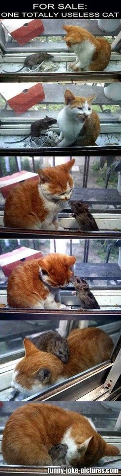 Funny Useless Cat Mouse Joke Picture