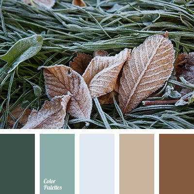 beige color, color matching, dark brown, emerald color, gray color, house paint…