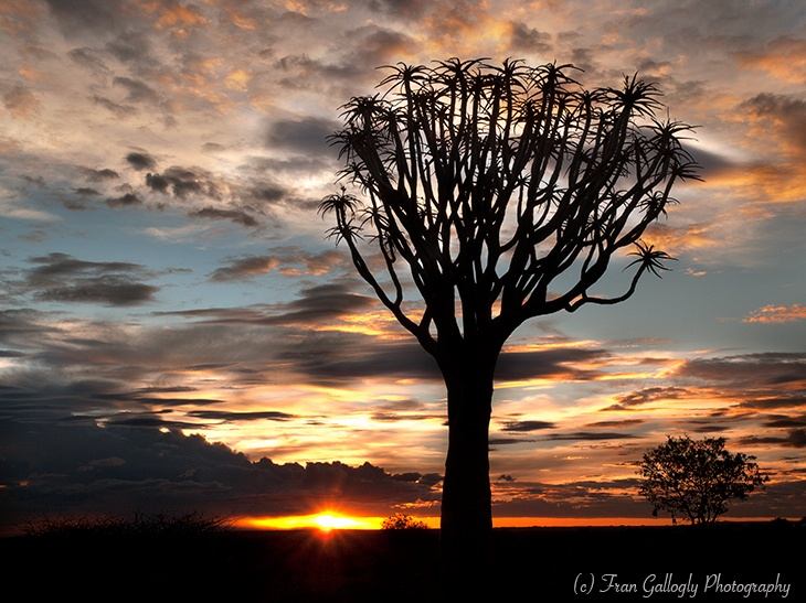 Sunset, Quiver Tree Forest