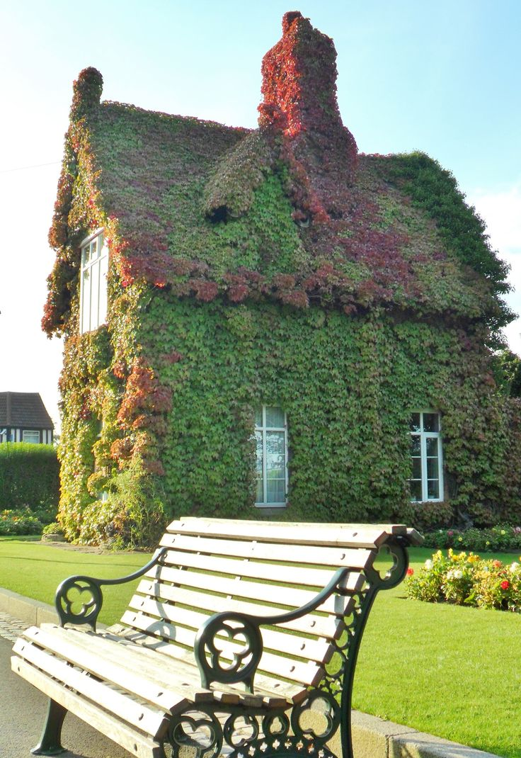 Boston ivy covered gate keepers cottage turning Autumn red ...