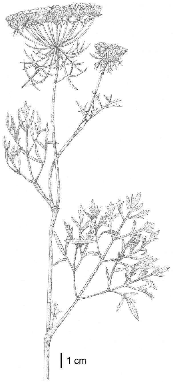 best botanical art images on pinterest botanical drawings