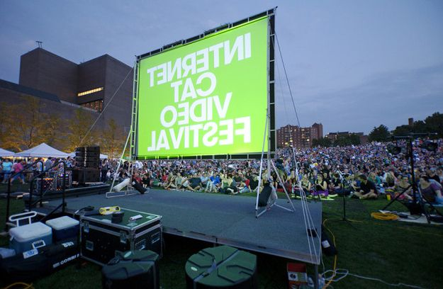 Snaps from the 2012 Internet Cat Video Festival, which drew more than 10,000 cat enthusiasts to Walker Field, adjacent to the Minneapolis Art Museum. | Handicapping The 5 Nominees For The Internet Cat Video Festival's 2nd Golden Kitty Award