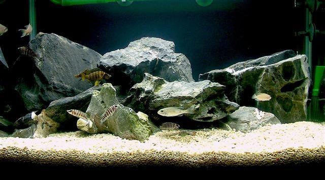 9 best fish tank ideas images on pinterest for Fish tank setup ideas