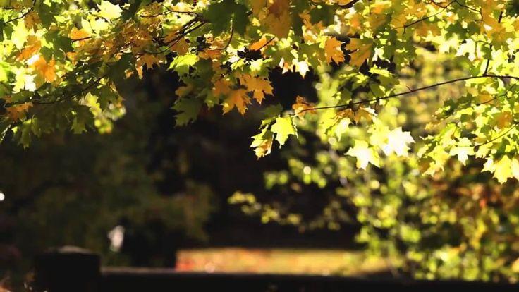 RAINER MARIA RILKE - Herbsttag