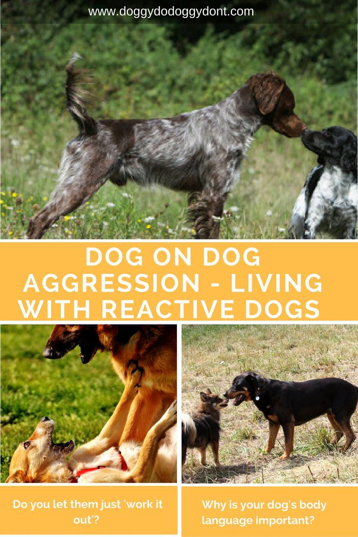 How To Stop Dog Aggression Reactive Dog Aggressive Dog Dog