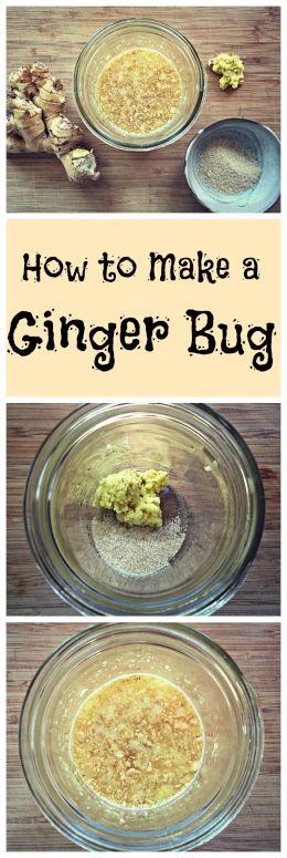 How to Make a Ginger Bug~ A traditionally fermented starter for homemade natural sodas! www.growforagecookferment.com