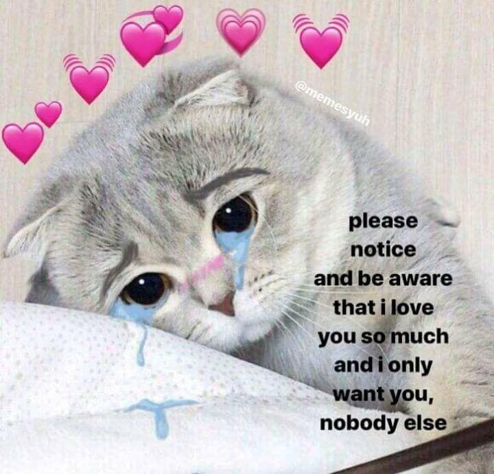 Mih Ae Cute Cat Memes Cute Love Memes Love Memes