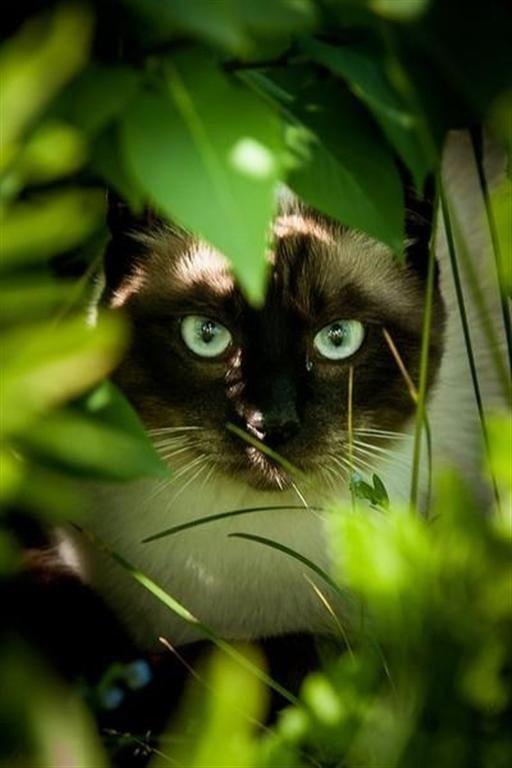 De caza en el jardín...