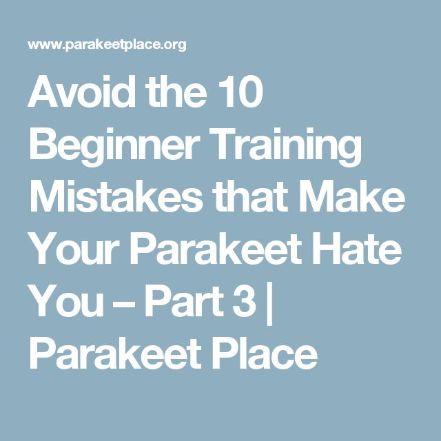 Avoid the 10 Beginner Training Mistakes that Make Your Parakeet Hate You – Part 3 | Parakeet Place