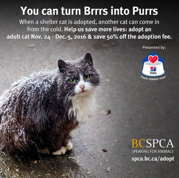 Been thinking about adding a furry addition to your family, but need that extra little push? Our adoption campaign is here to help you take that step! Pay half price on the adoption fee in return for giving an adult cat a warm and happy forever home. A great deal for both of you. Visit spca.bc.ca/adopt, today. The usual matching process applies. Presented by Hill's Pet Nutrition #itscoldoutside #AdoptBCSPCA #AdoptDontShop