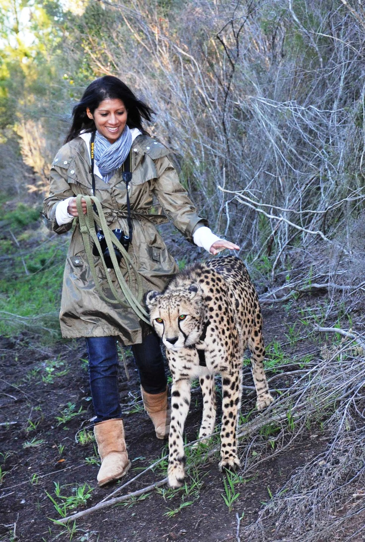 Walk with a cheetah!
