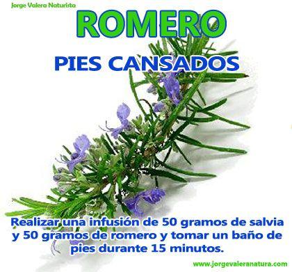 Romero propiedades medicinales romero rosemary pinterest for Planta decorativa propiedades medicinales