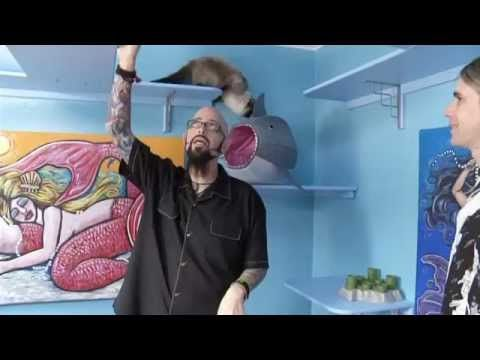 My cat from hell season 5 episode 13 jackson galaxy our for Jackson galaxy cat mojo